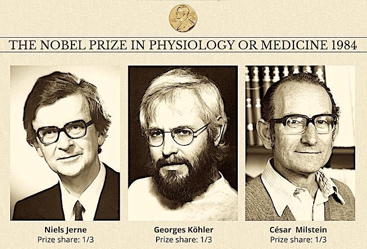 "Image: 1984 awardees of Nobel Prize in Physiology or Medicine  for theories concerning ""the specificity in development and control of the immune system"" and the discovery of ""the principle for production of monoclonal antibodies"". Credit: Nobelprize.org"