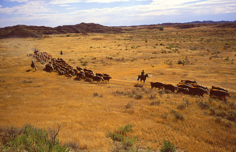 Photo: Overgrazing by livestock can lead to land degradation. Credit: The United States Department of Agriculture.