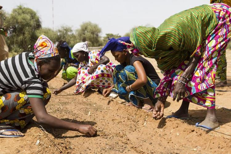 Photo: Women planting to combat desertification. Credit: UNCCD