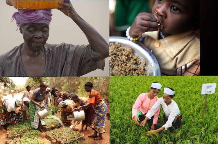 Collage of photos from FAO (left to right from top to bottom): farmer from DR Congo, a child eating rice, farmers from Kenya, and from Viet Nam. Credit. IDN-INPS