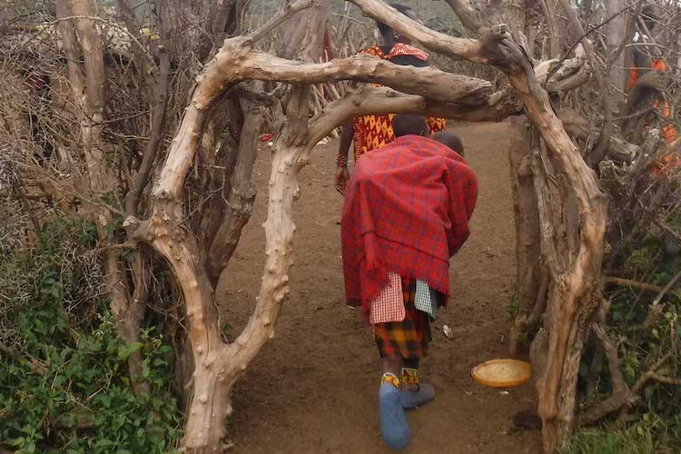 Photo: Entrance to a new boma built by the displaced Maasai. Credit: The Oakland Institute.