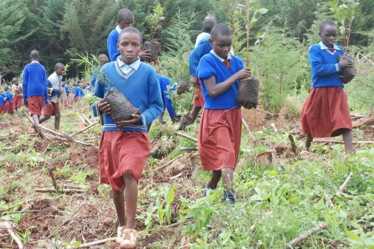 Photo: Kenyan children planting trees. Source: The African News Journal.