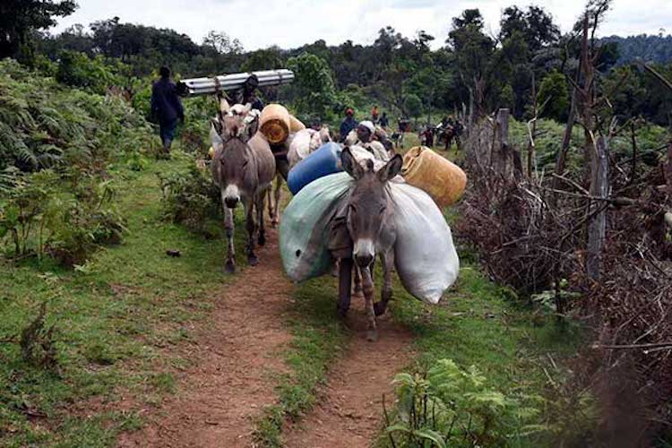 Photo: Families leave Maasai Mau Forest on July 8, 2018 as evictions of illegal settlers started. Photo | File | Nation Media Group